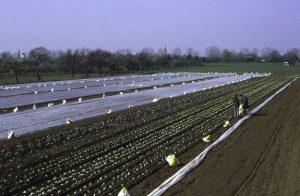 Fruehjahrspflanzung